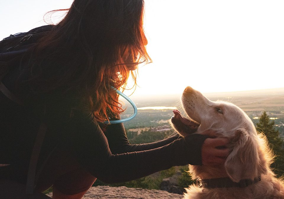 girl and dog, microchip month, Pikes Peak Vet
