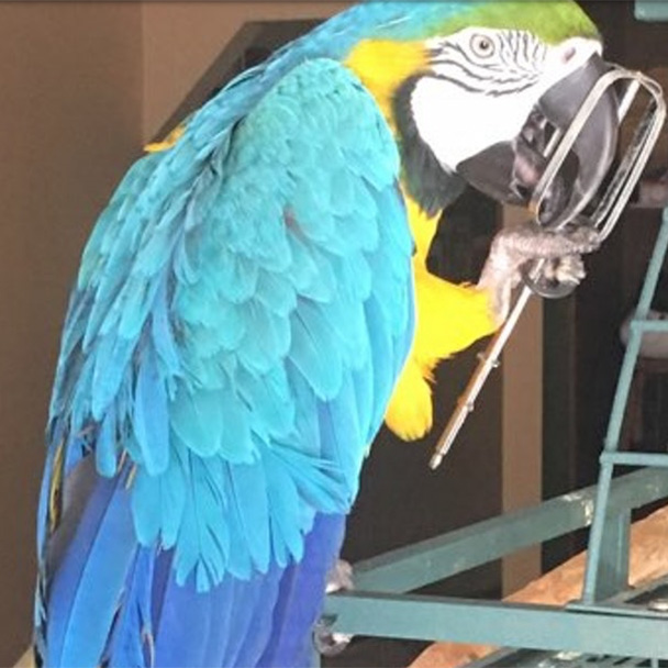 Pikes Peak Veterinary Clinic PPVC Colorado Springs vet. client pet selfies macaw