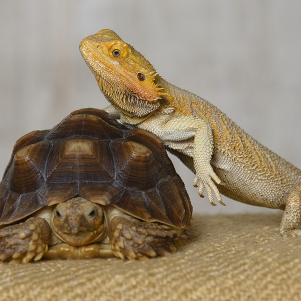 Pikes Peak Veterinary Clinic PPVC Colorado Springs vet. Reptile and exotic pet services.